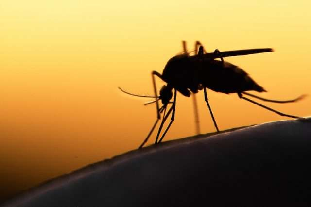 private jet charters Zika virus