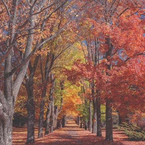 private jet charter for fall foliage